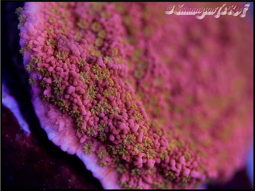 coral monti3.jpg