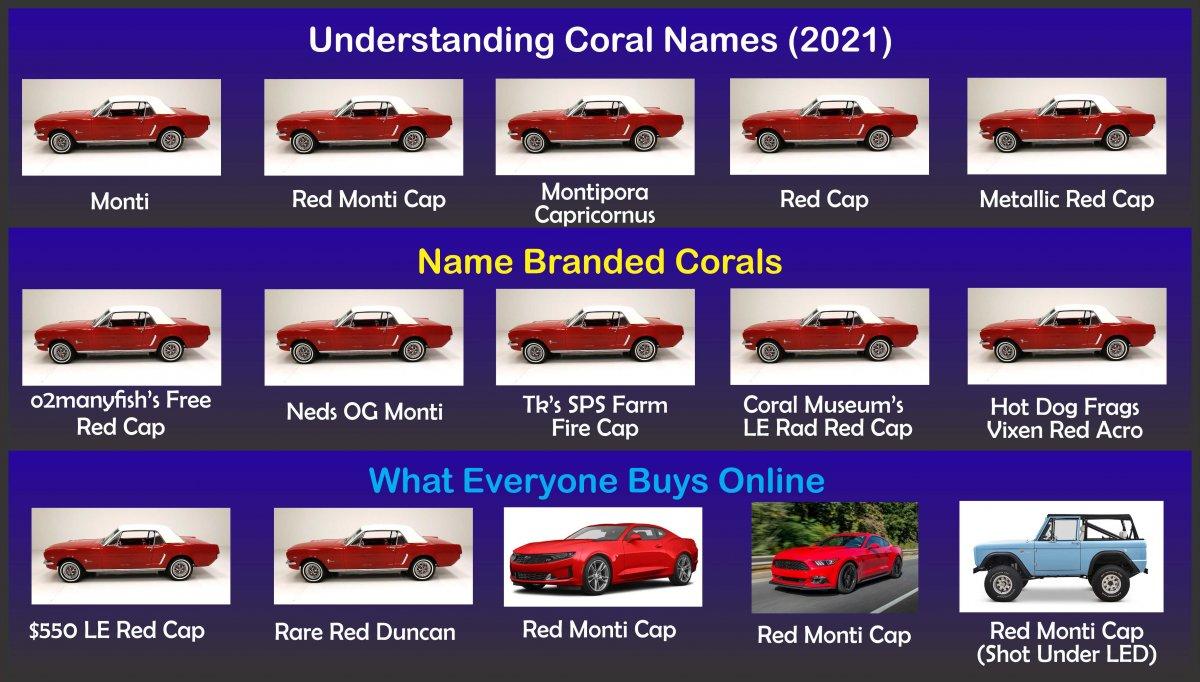 Coral Names r1.jpg