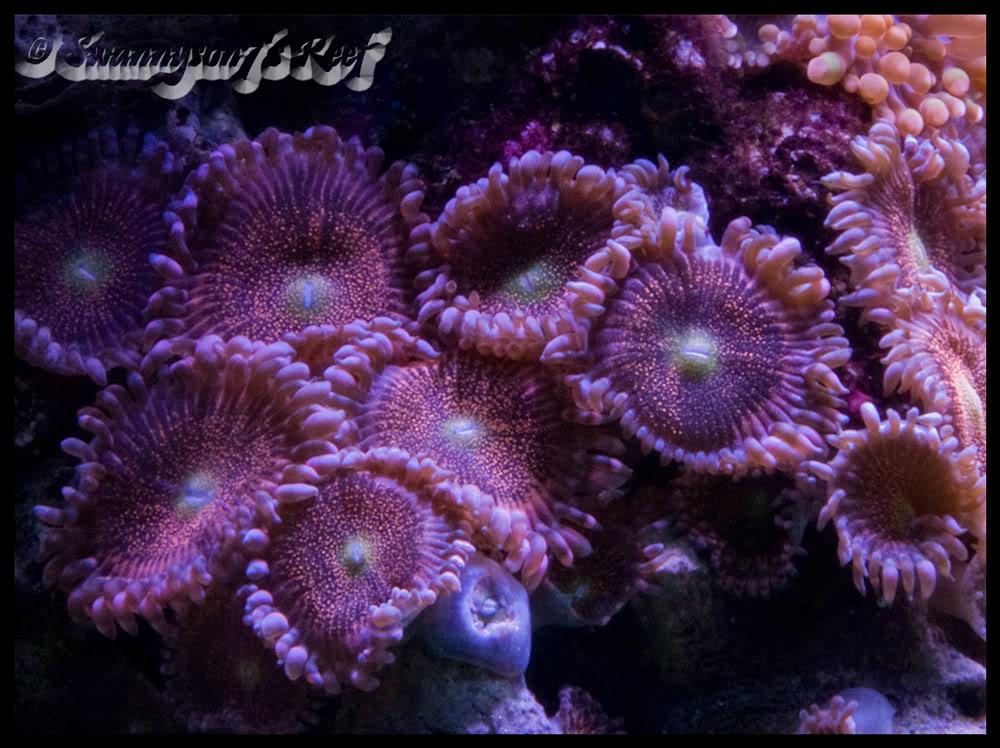 coral palys.jpg