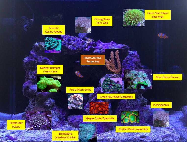 Coral Plan 5-2020.png