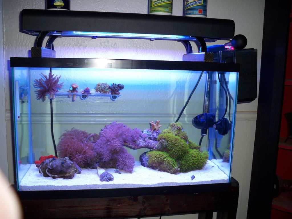Fish tank quarantine - This Frag Tank Will Need To Cycle Just Like Any Other Tank And Will Go Through The New Tank Uglies As Well Having Inverts Always In There Will Help With