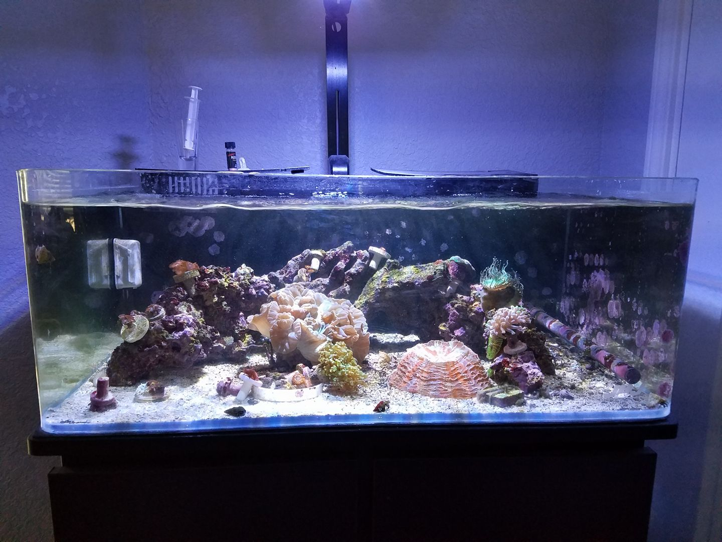 Fish tank quarantine - Operating A Coral And Invert Qt Can Be Lifesaving Reef Saving And Money Saving In The Long Run Going Through The Trouble To Quarantine Your Fish And Be