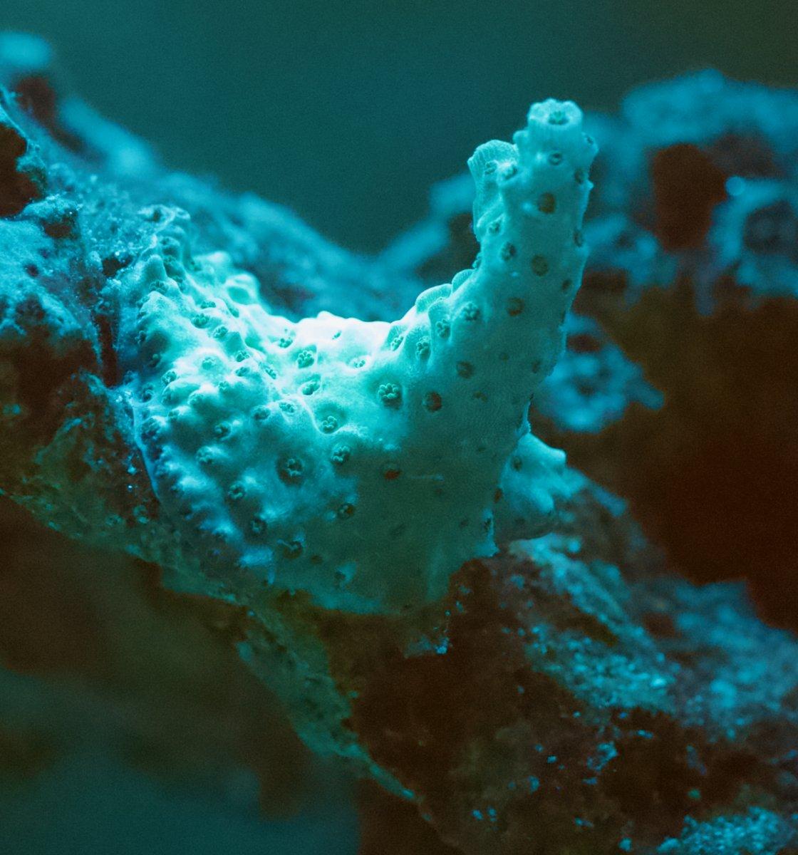 Coral Struggles - 5 of 7.jpeg