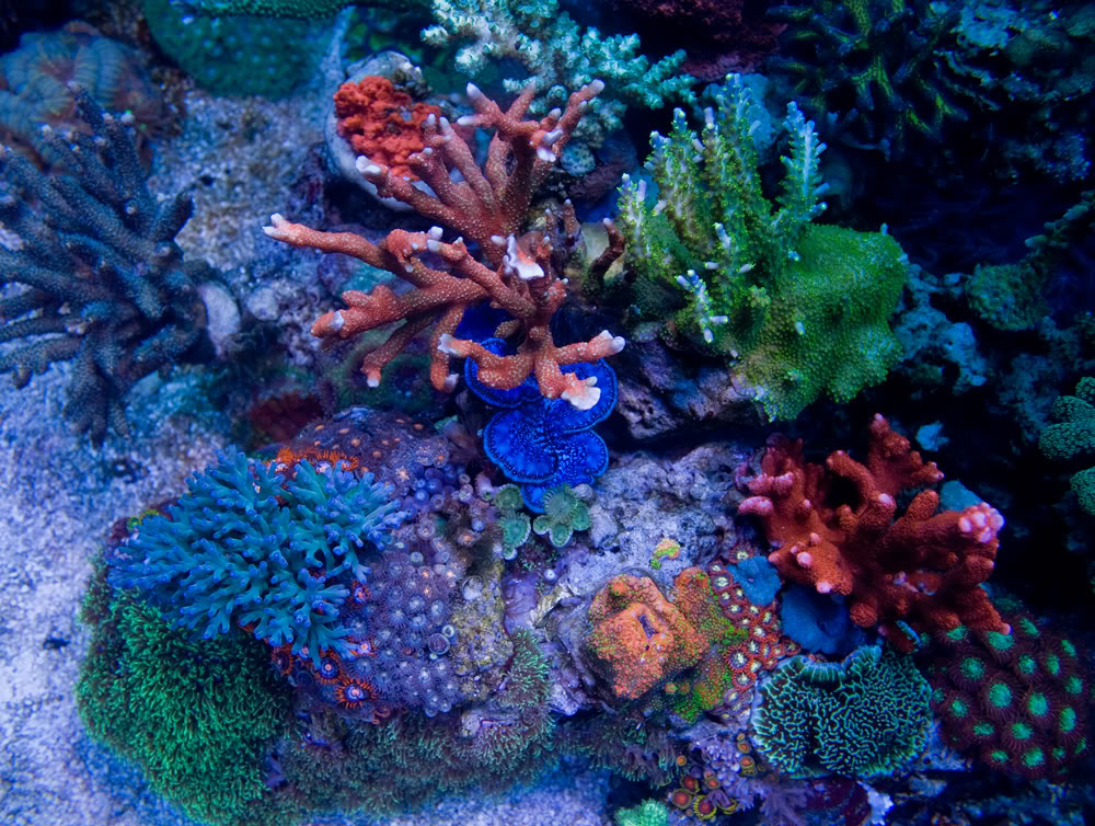 coral td2.jpg