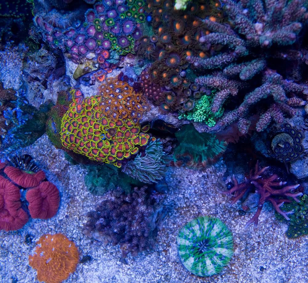 coral td3.jpg