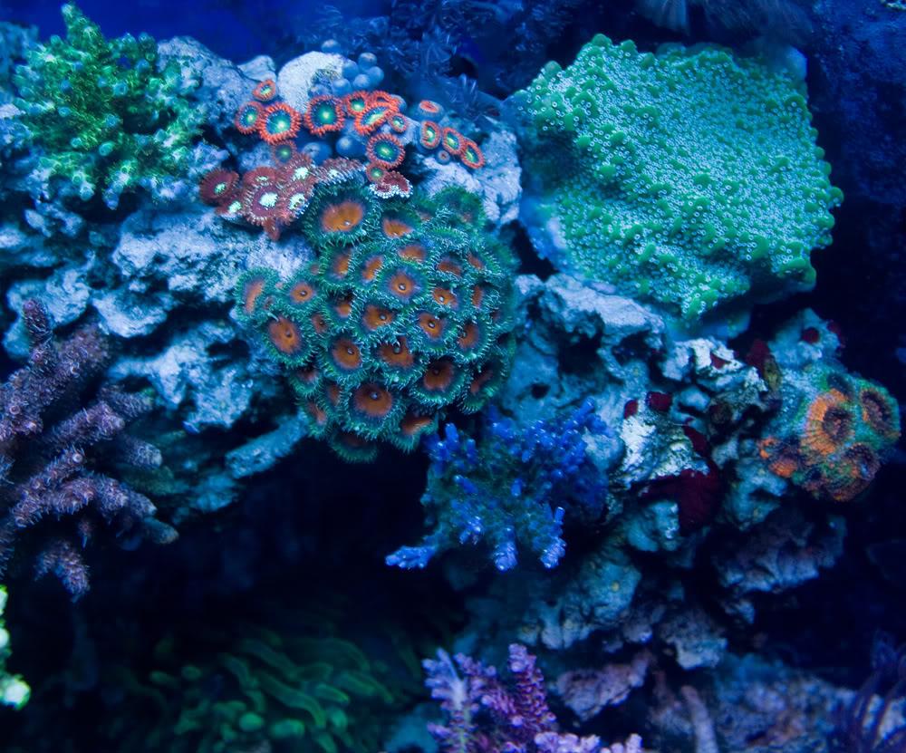coral td4.jpg