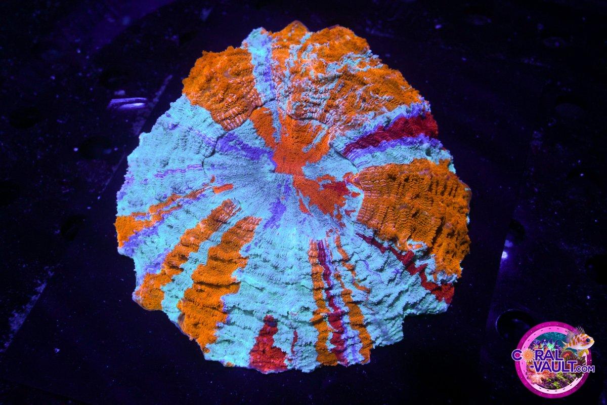 Coral-Vault-567.jpg