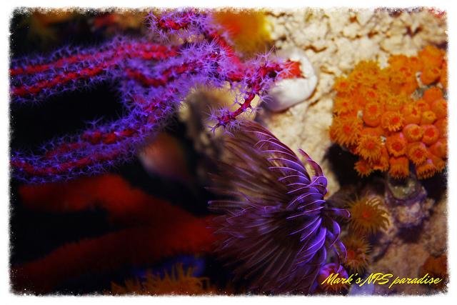 coral7.jpg