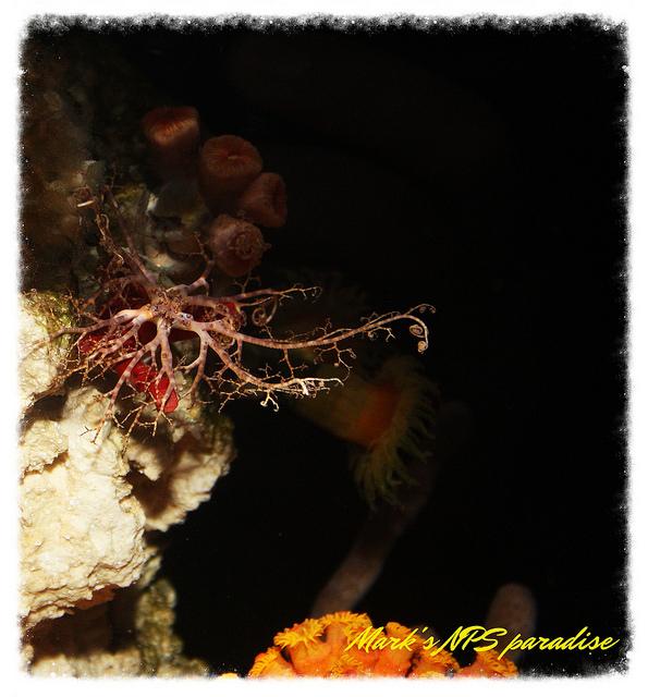 coral8.jpg