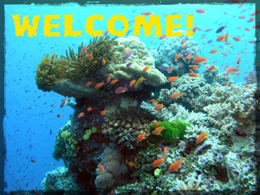 coral_crinoid_chimney_787med.jpg