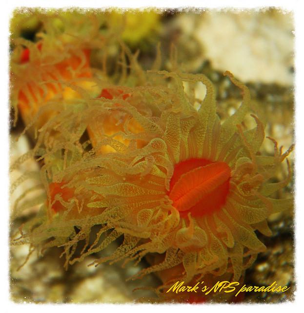 coralmacro.jpg