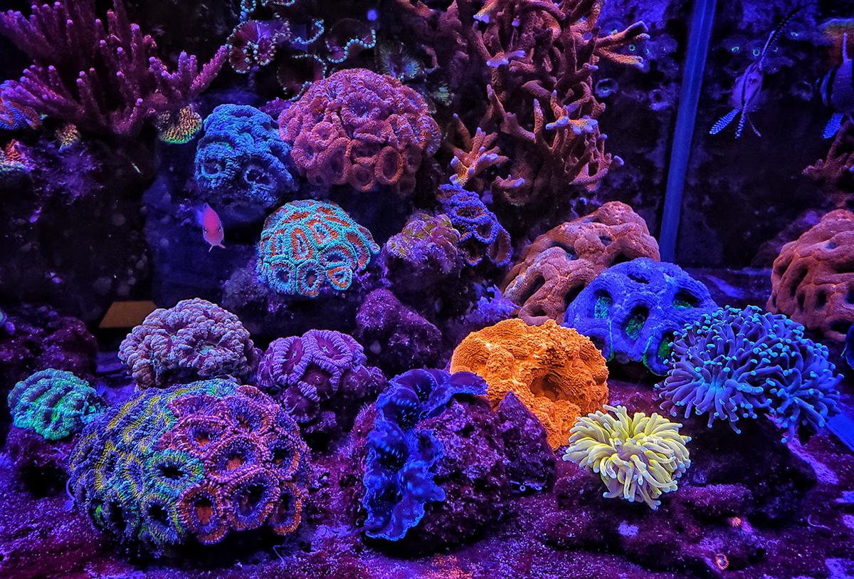 corals-01 copy.jpg