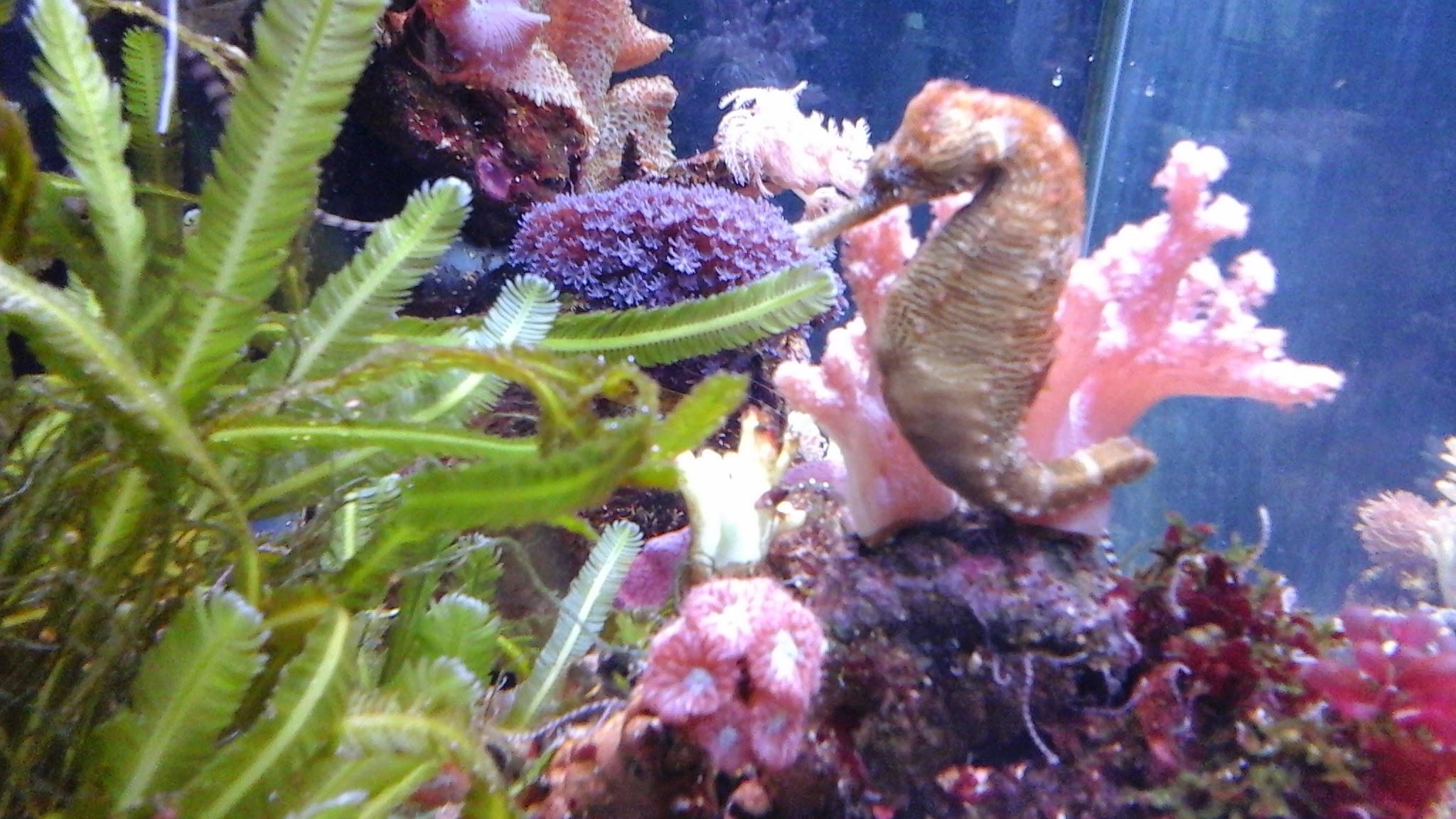 coralsmacro.jpg