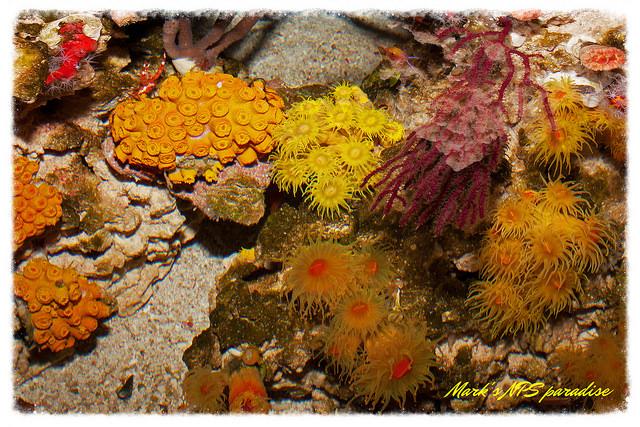 coraltopdown.jpg
