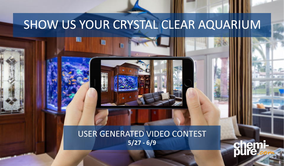Crystal-Clear-Video-Contest-Image.jpg