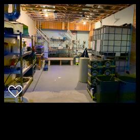 current fish room.png