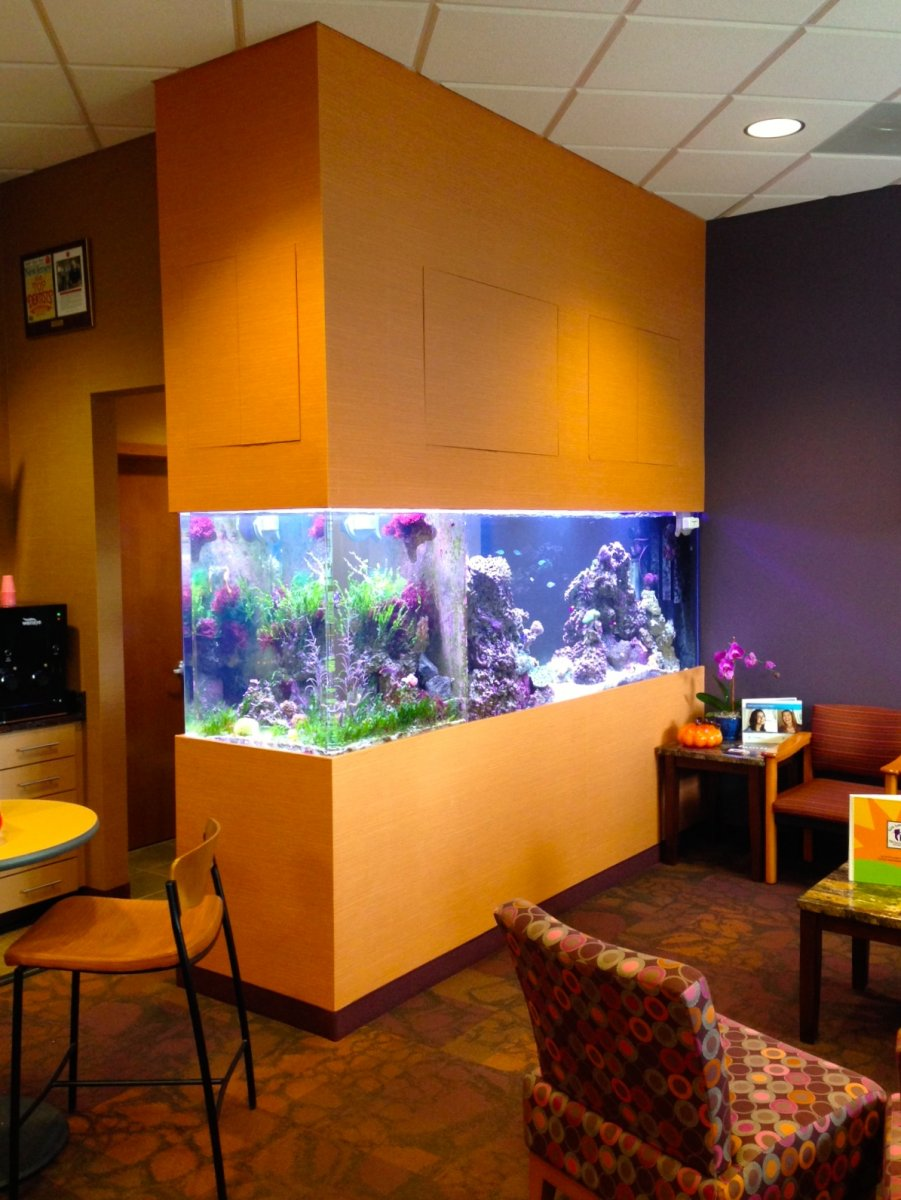 Custom-See-through-Saltwater-Reef-Aquarium.jpg
