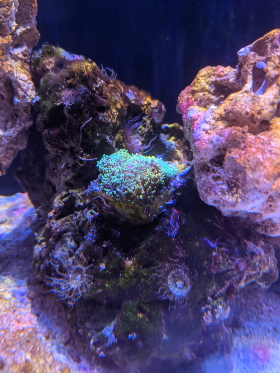 Day 5 coral.jpg
