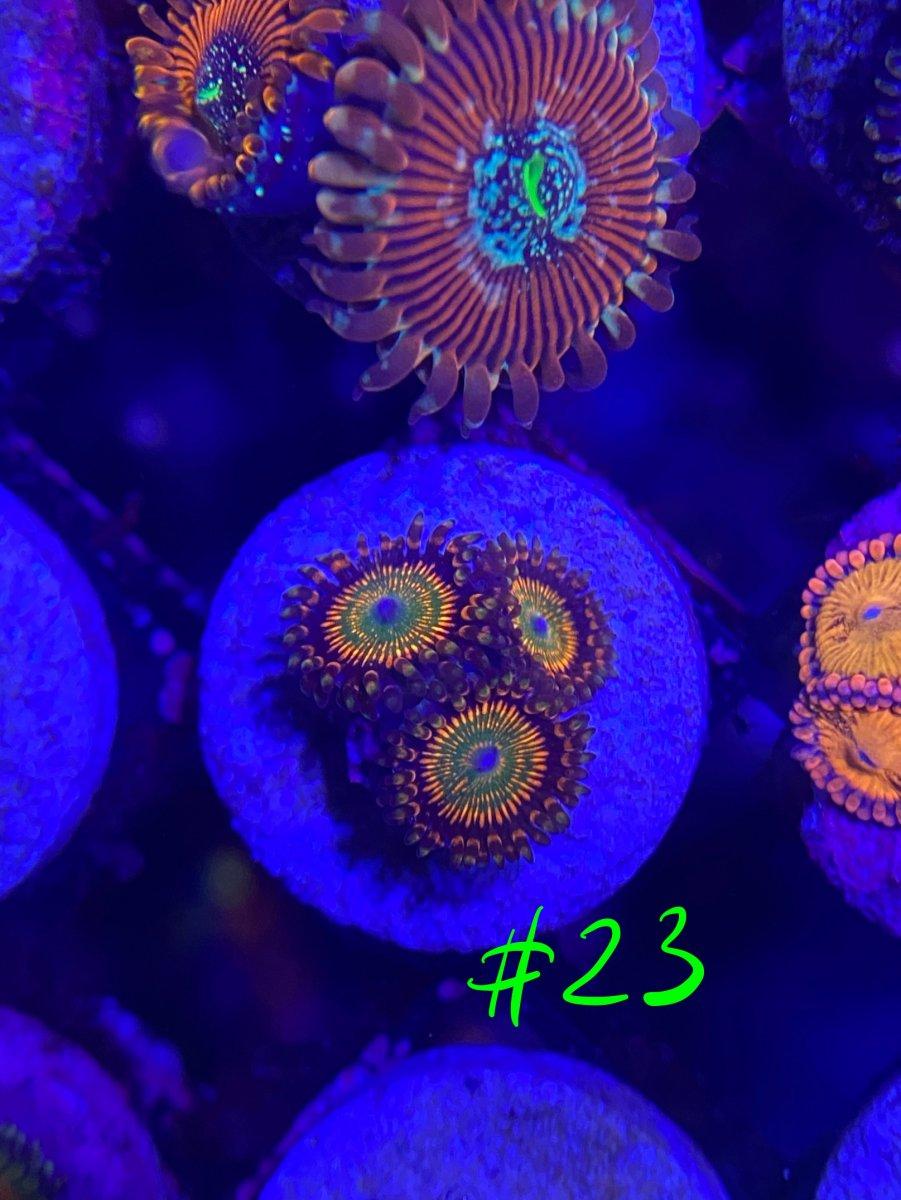 DD718EE6-0C01-4F61-BAB7-E1A098436B13.jpeg