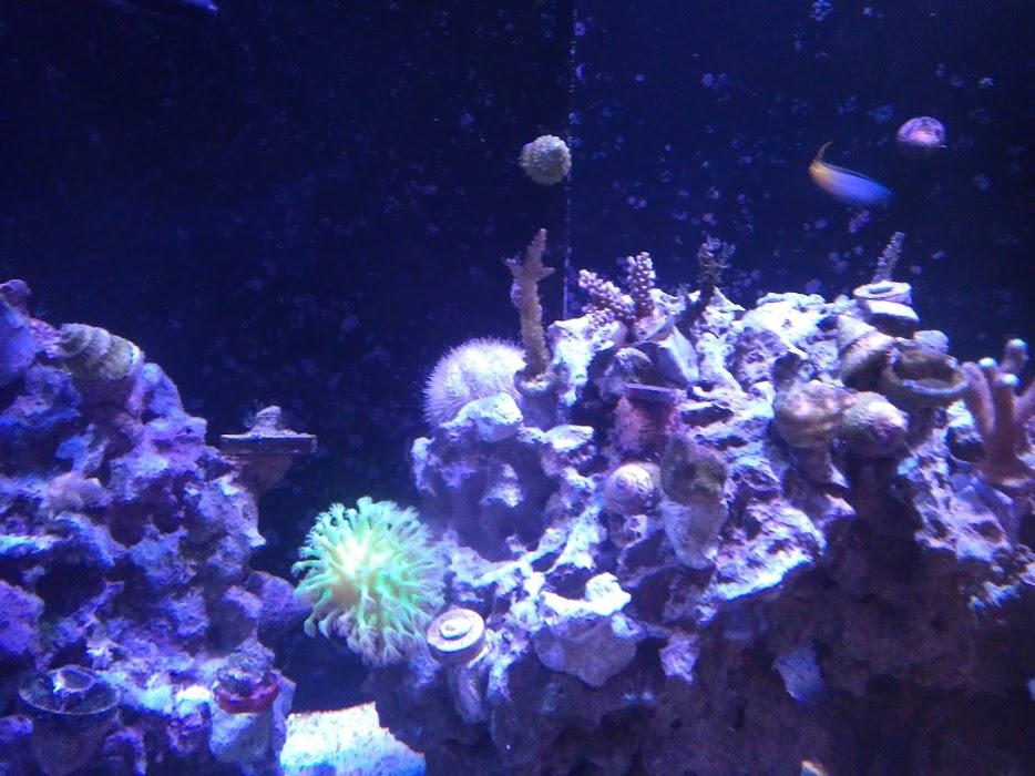 十二月Coral.jpg