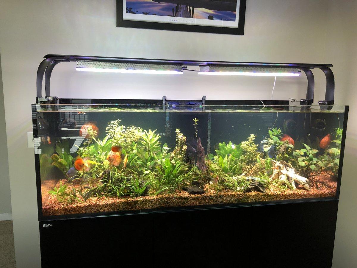 discus-planted-aquarium -light.jpg