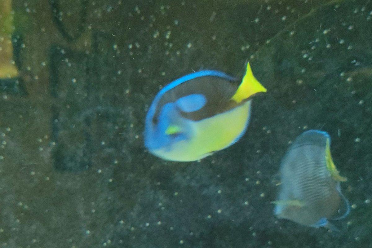 Dory and Neon1.jpg