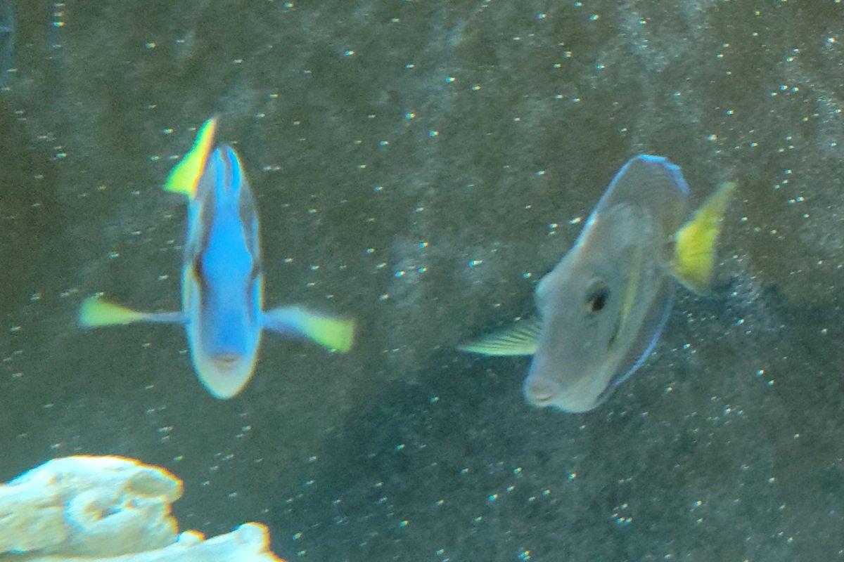 Dory and Neon2.jpg
