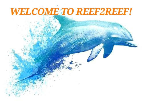 drawing-dolphins-hand-painted-dolphin-cartoon-image-and-fish-images.jpg