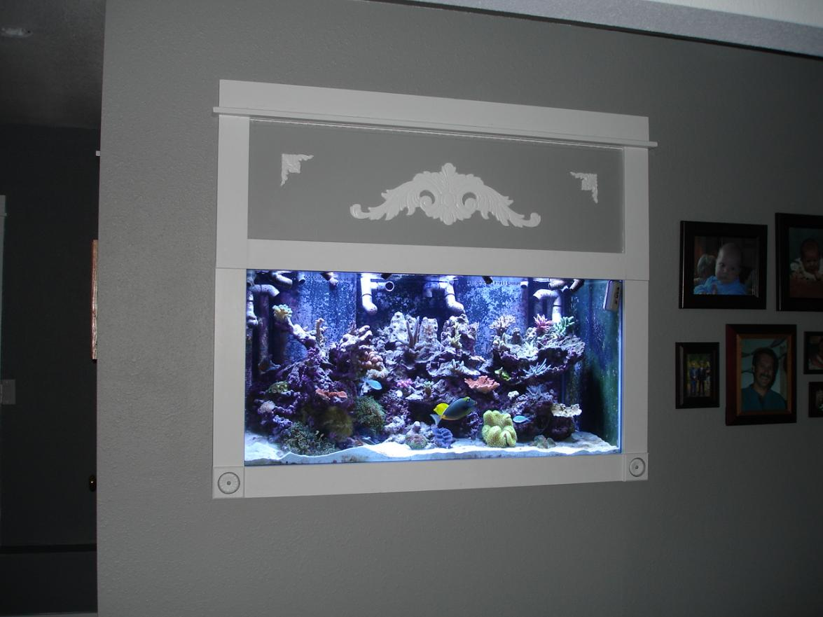 Trido 39 S 210 In Wall Reef2reef Saltwater And Reef