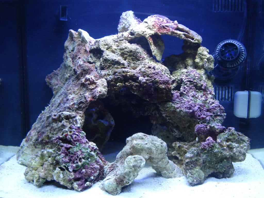 Vidofner's man-cave-reef | REEF2REEF Saltwater and Reef ...