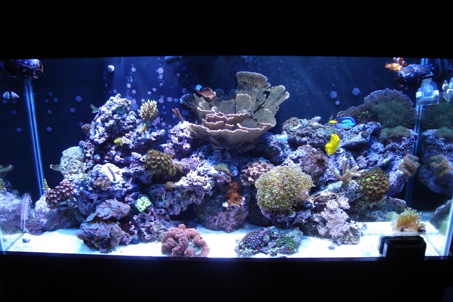 Unique Aquascaping Ideas Needed The Reef Tank | freshwater ...