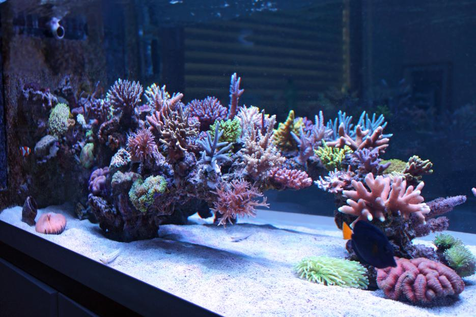 Show Off Your Large Tank Aquascape :) | Page 17 ...