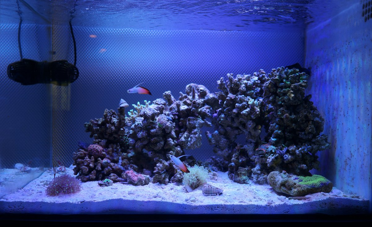 Show Off Your Nano Tank Aquascape Page 6 Reef2reef