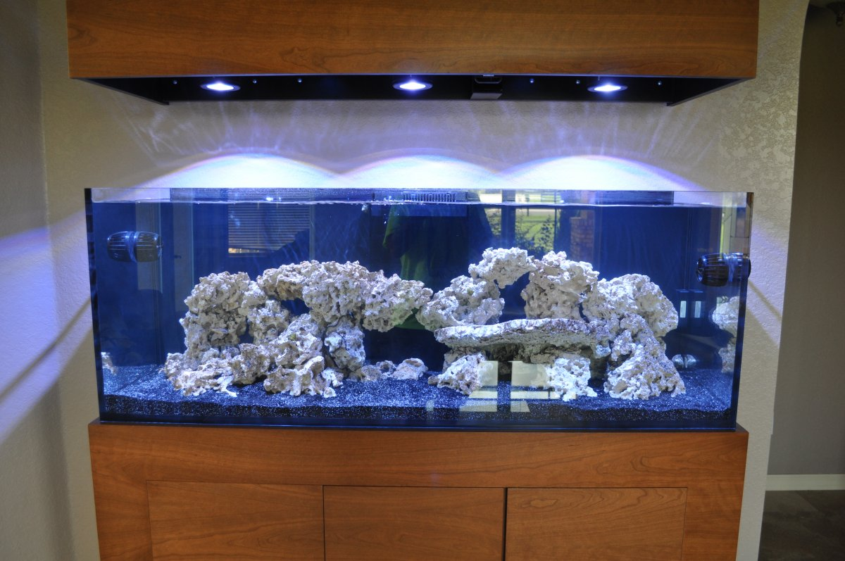 Red Sea Reefer 450 White Tiger Page 4 Reef2reef
