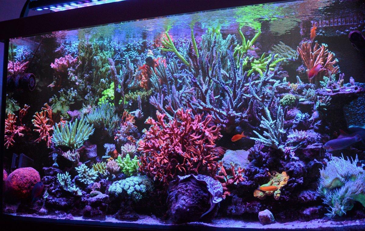 DSC_3676 nightime reef.jpg