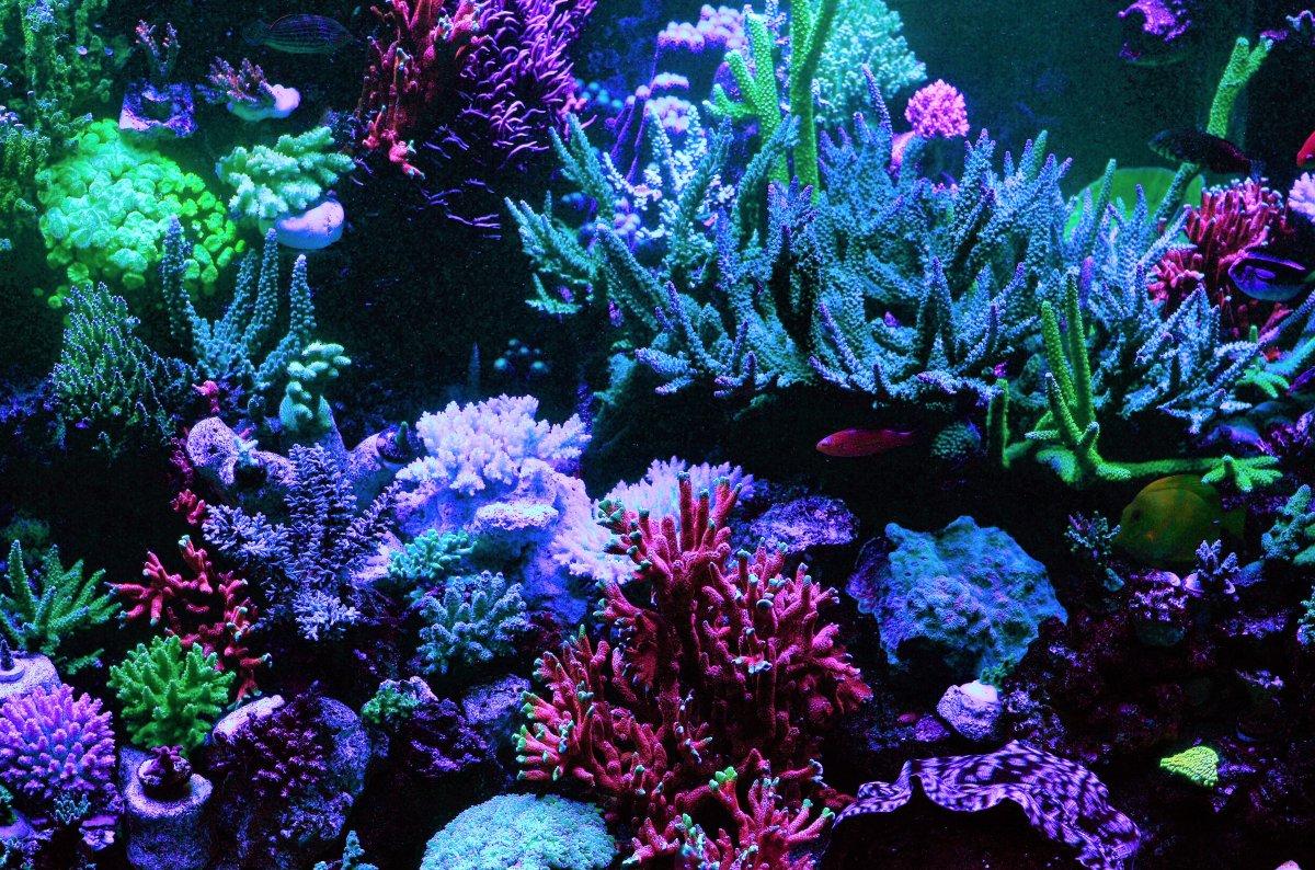 DSC_7273 night shot corals.jpg