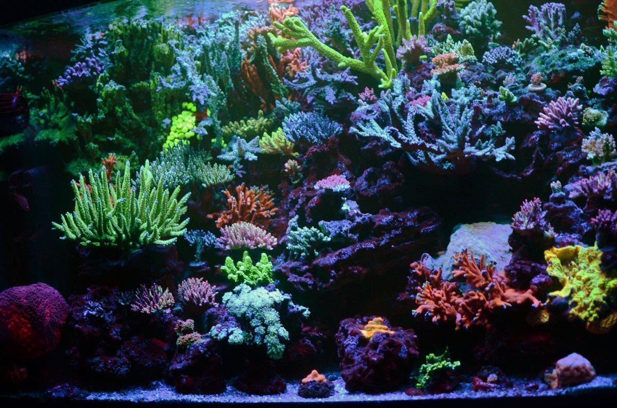 DSC_8133 corals.JPG