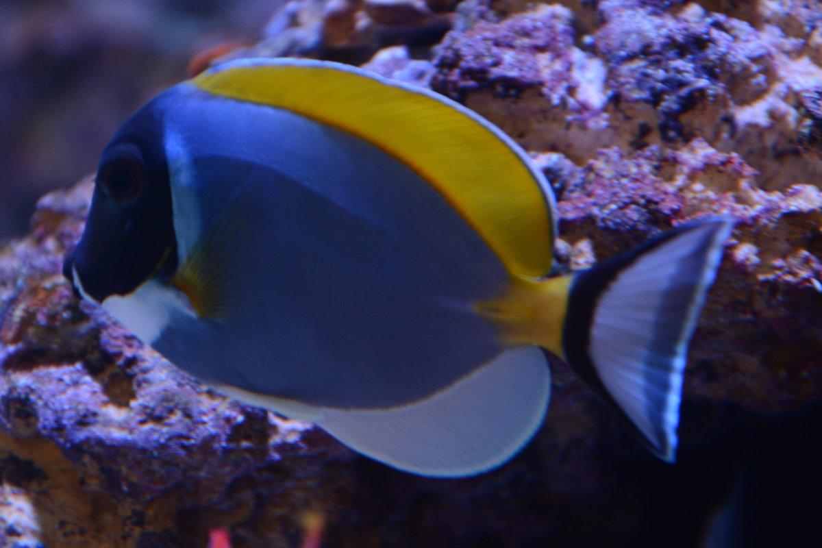 80 Gallon Reef Restart Reef2reef Saltwater And Reef