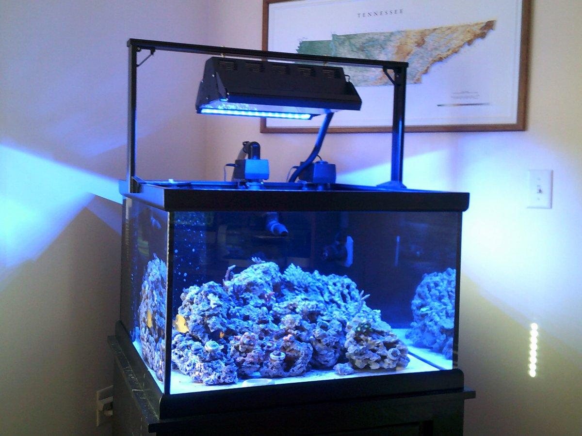 Tennessee - Cube Reef Aquarium 70 Gallon 30 x 30 x 20 Package - $775 ...