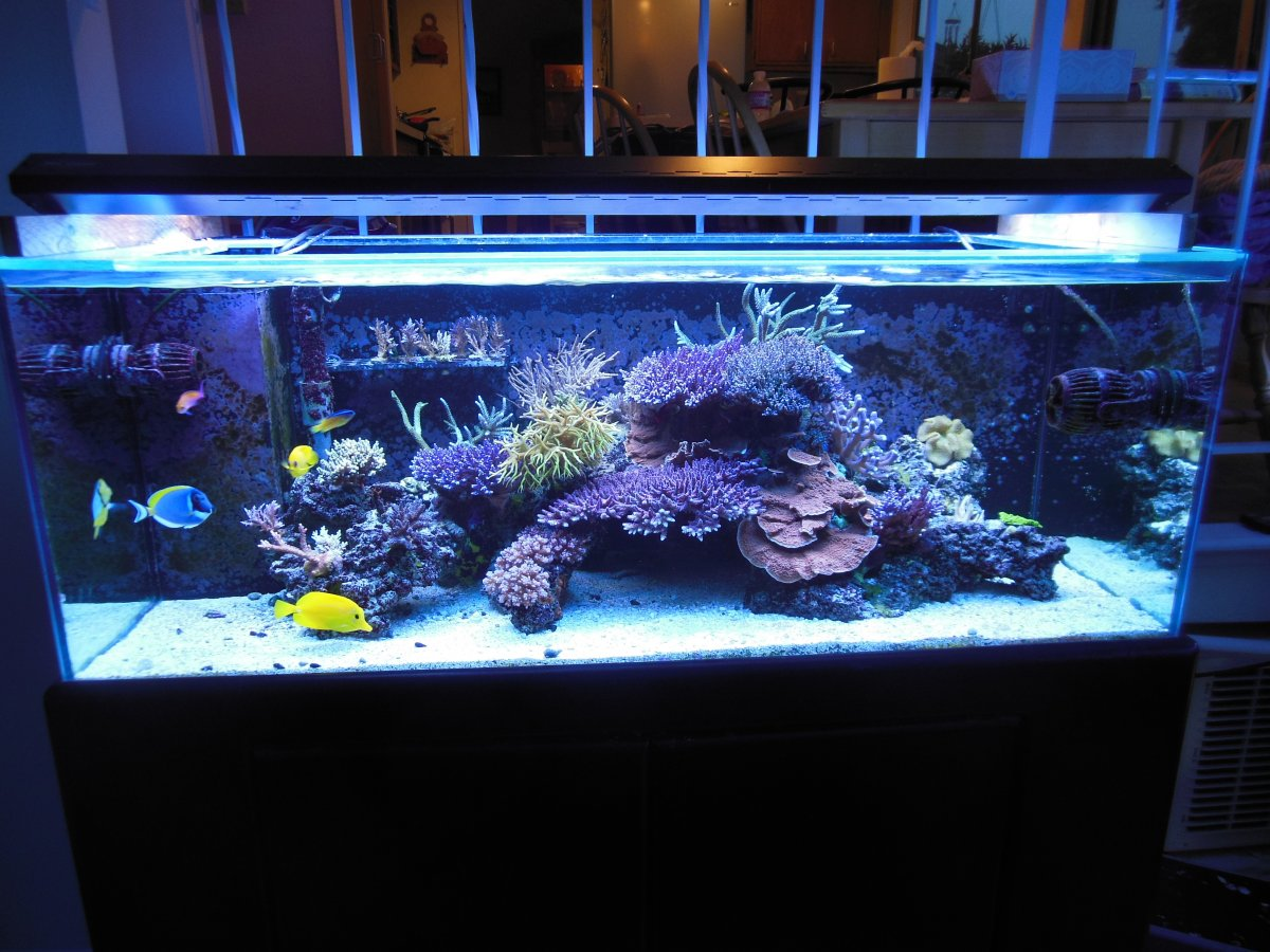 I Am Using Ati Blue C And Aquablue Special 2 Each On This Tank Picture Is Without Any Color Manition Have Tried Purple Actinics Before