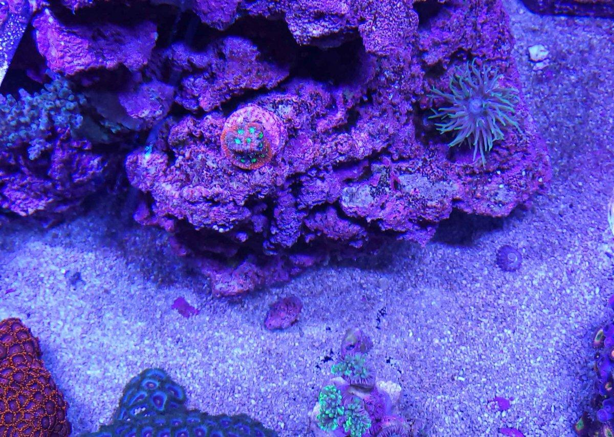Duncan-War coral (1 of 1).jpg