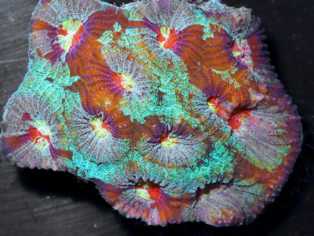 F JN3007 39 Blast Of Brain.jpg