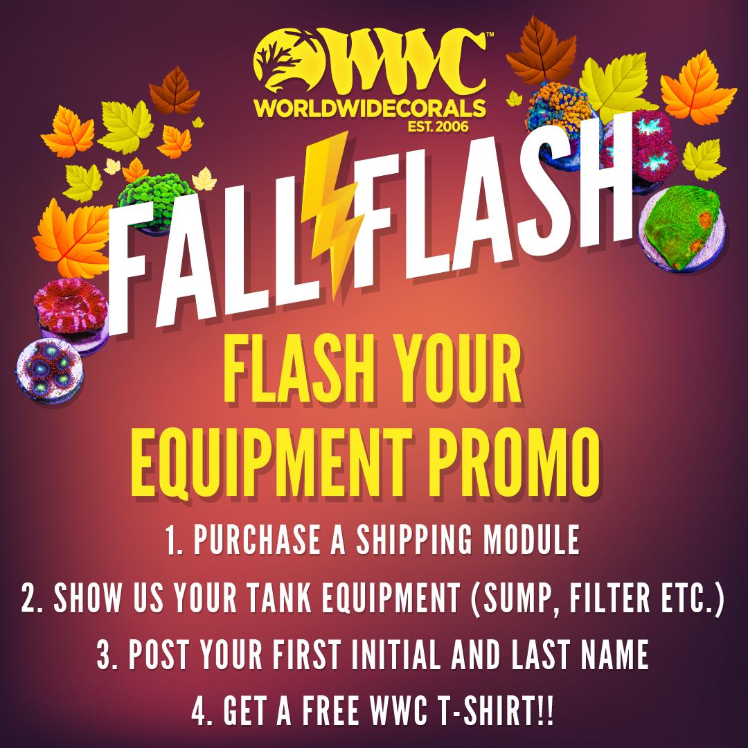 fall_flash_promoSM1x1.jpg