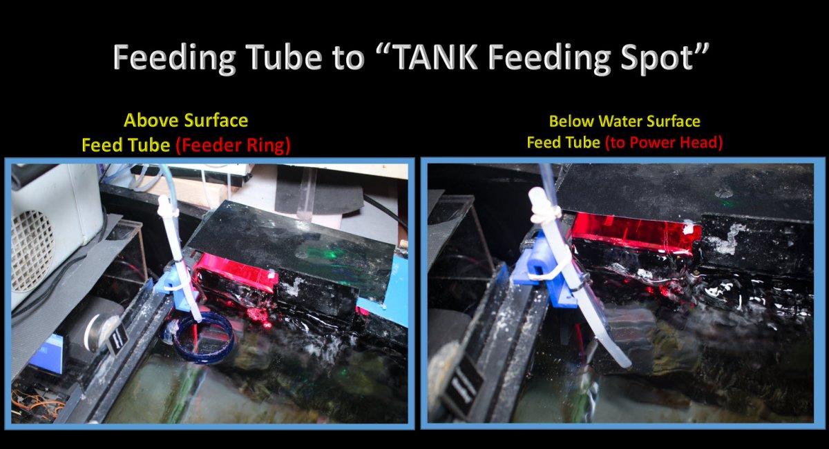FeedingTubeToTankFeedingSpot.jpg