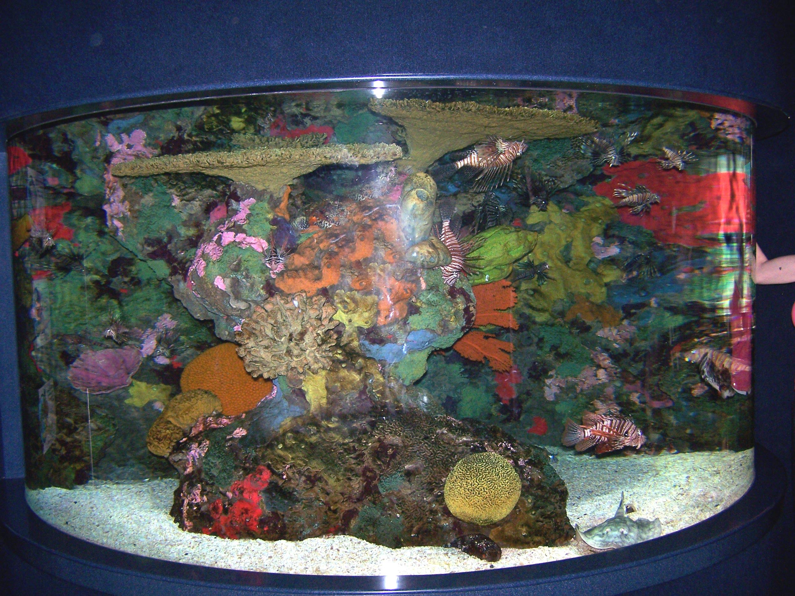 Freshwater aquarium fish documentary - File0001949926776 Jpg