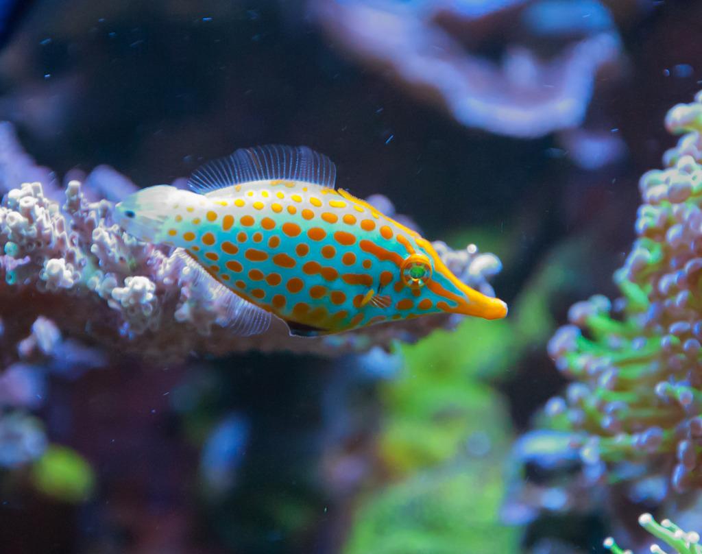 filefish.jpg