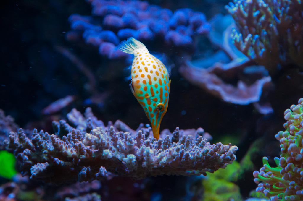 filefish2.jpg