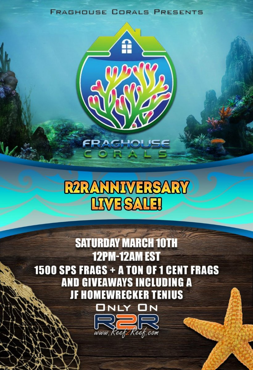 FINAL_live sale anniversary 2.jpg