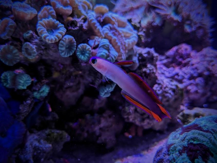 firefish.jpg