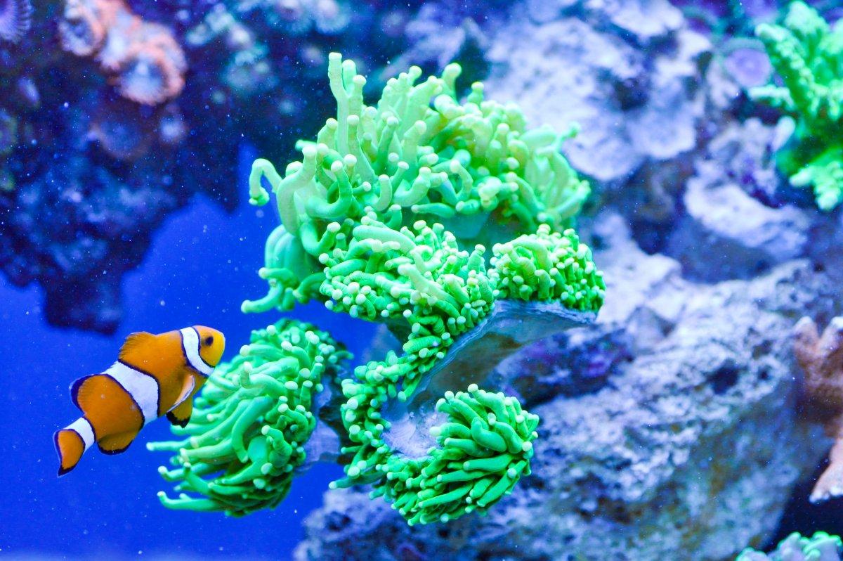 fish 2.jpeg